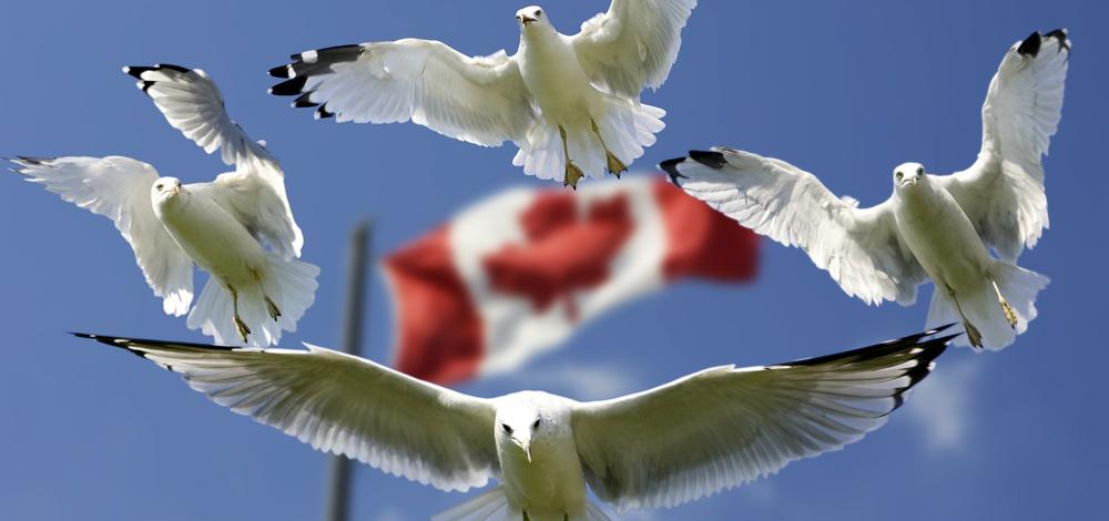 Оффшорная компания в Канаде